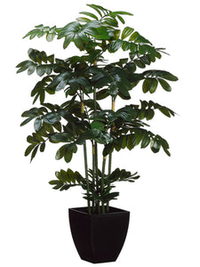 "48"" Zamia Plant in Black Plastic Pot Green (pack of 2)"