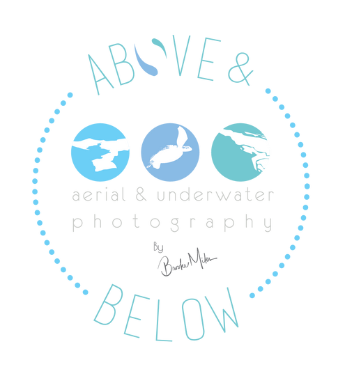 Above & Below Photography Gallery