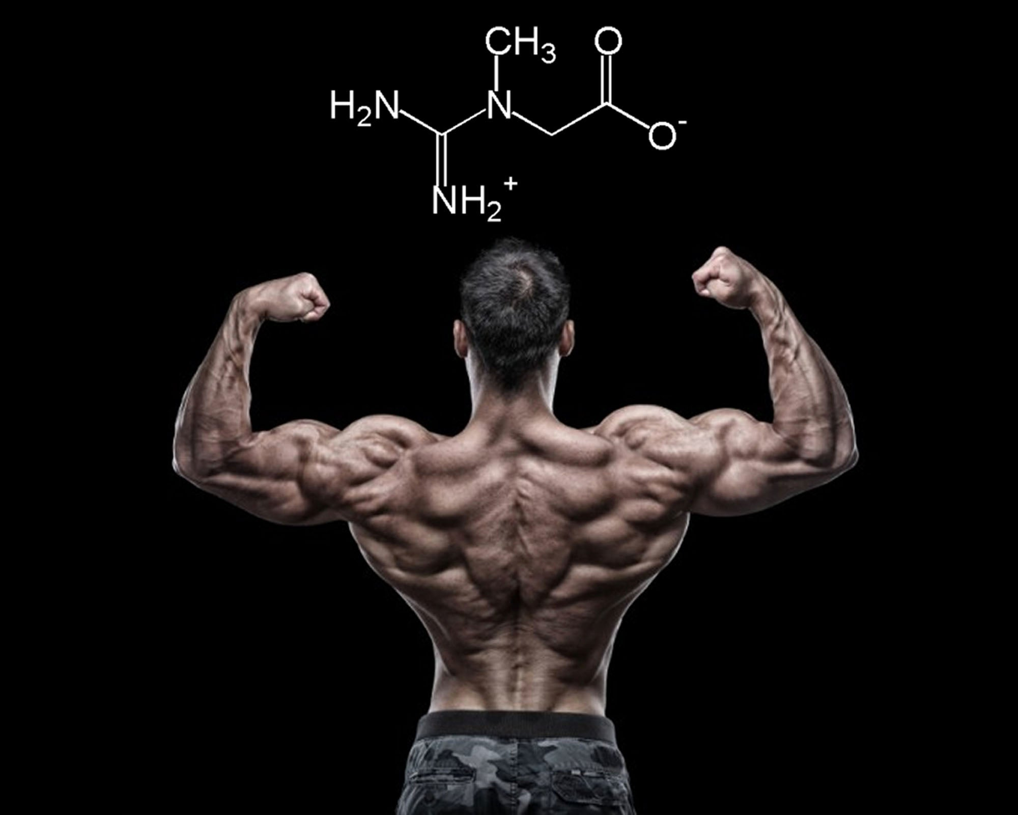 Supplement Education: Creatine