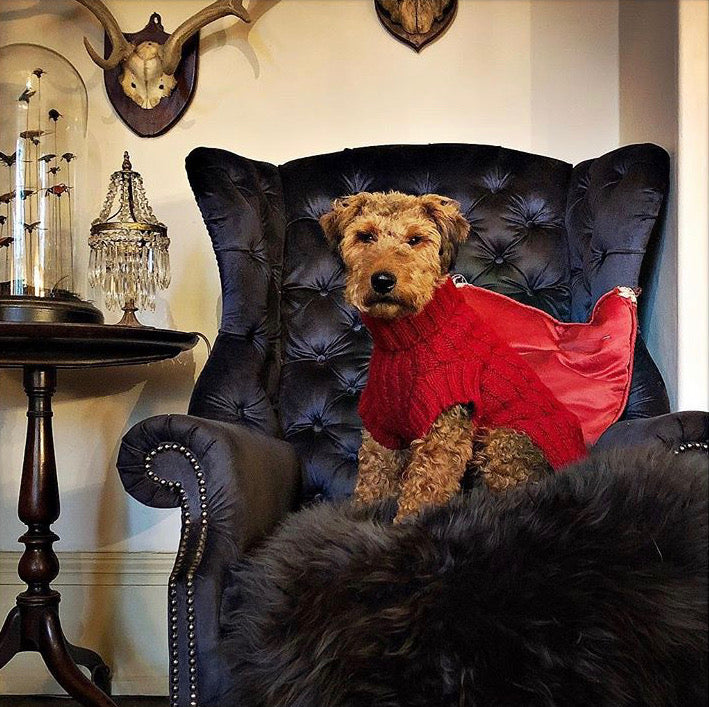 Terrier in designer red cable jumper hand crafted