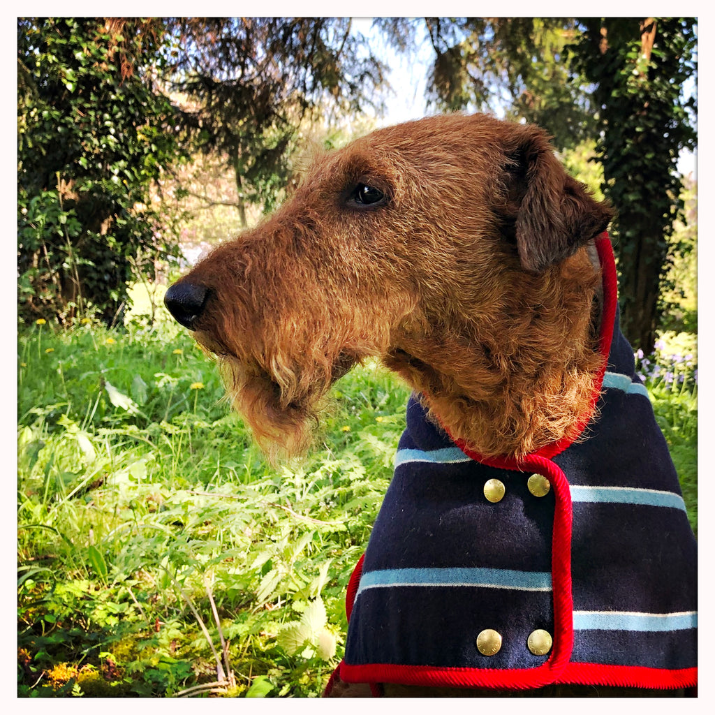 DESIGNER DOG COAT BLAZER ON TERRIER IN NAVY AND RED STRIPE