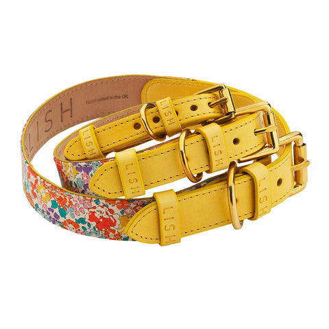 yellow designer dog collar for all breed sizes