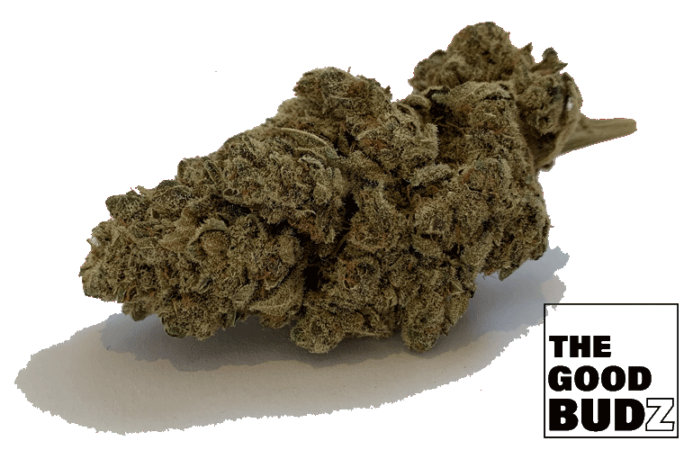 """White Russian"" Hemp Flower UK - The Good Budz"