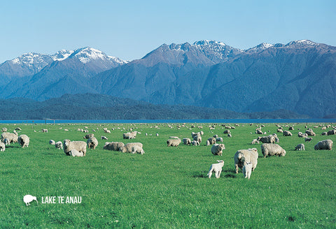 SFI669 - Sheep Lake Te Anau - Small Postcard