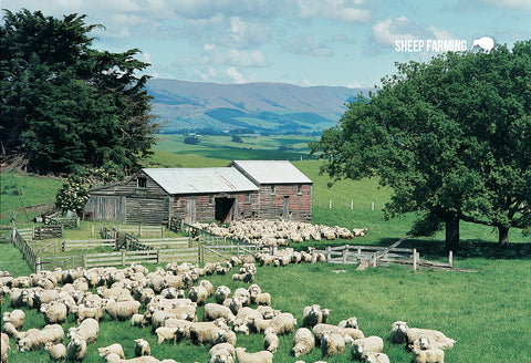SGI512 - Sheep Scene - Small Postcard