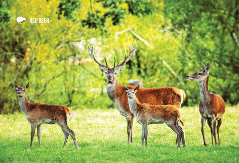 SGI526 - Red Deer - Small Postcard