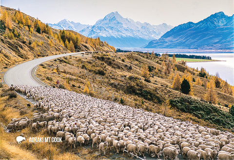 SMC347 - Mustering Sheep, Mt Cook - Small Postcard