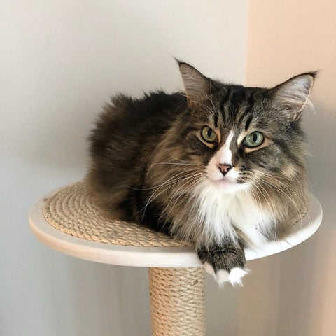 Cat Tree Review - Allie