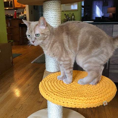 Cat Tree Review - James