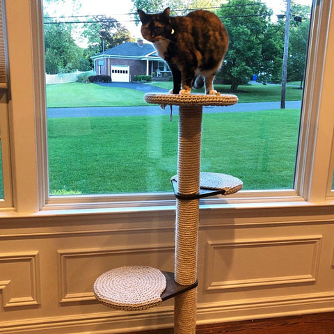 Cat Tree Review - Shaun