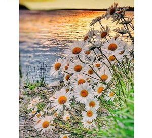 Daisy Sunset - DIY 5D Diamond Embroidery Seaside Diamond Mosaic Painting -Diamond Paintings, Diamond Paintings Store