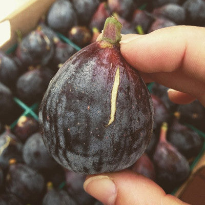 These are those perfectly ripe organic figs we can't stop talking about!