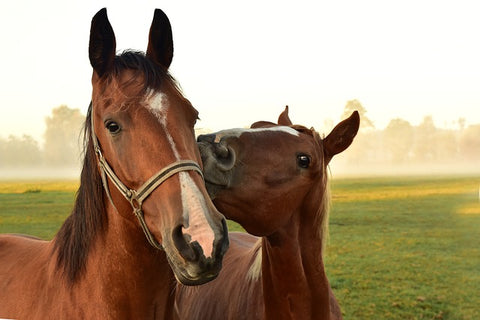 beautiful horses image