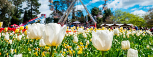 Floriade Canberra & Tulip Time Bowral Tour 2020