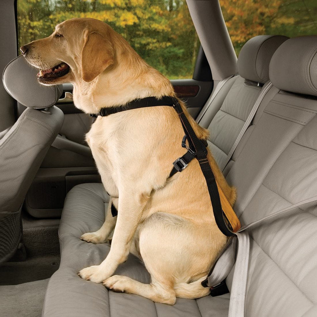 Kurgo Tru-Fit Enhanced Strength Smart Harness Can Be Attached to the car seat- side view