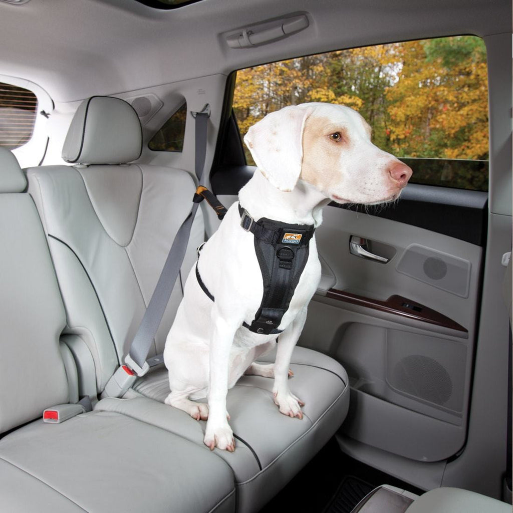 Kurgo Tru-Fit Enhanced Strength Smart Harness Can Be Attached to the car seat- front view