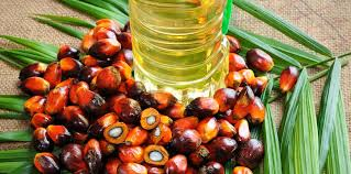 White palm kernel oil