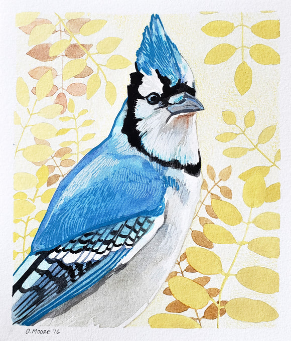 Bluejay Painting - Original Bird Art