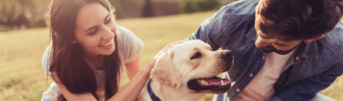 9 Benefits of CBD Oil for Dogs (with Scientific Proof)