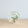 Minimalist Terrarium in a Glass Globe with Flat Bottom - Choose Your Custom Tillandsia Air Plant