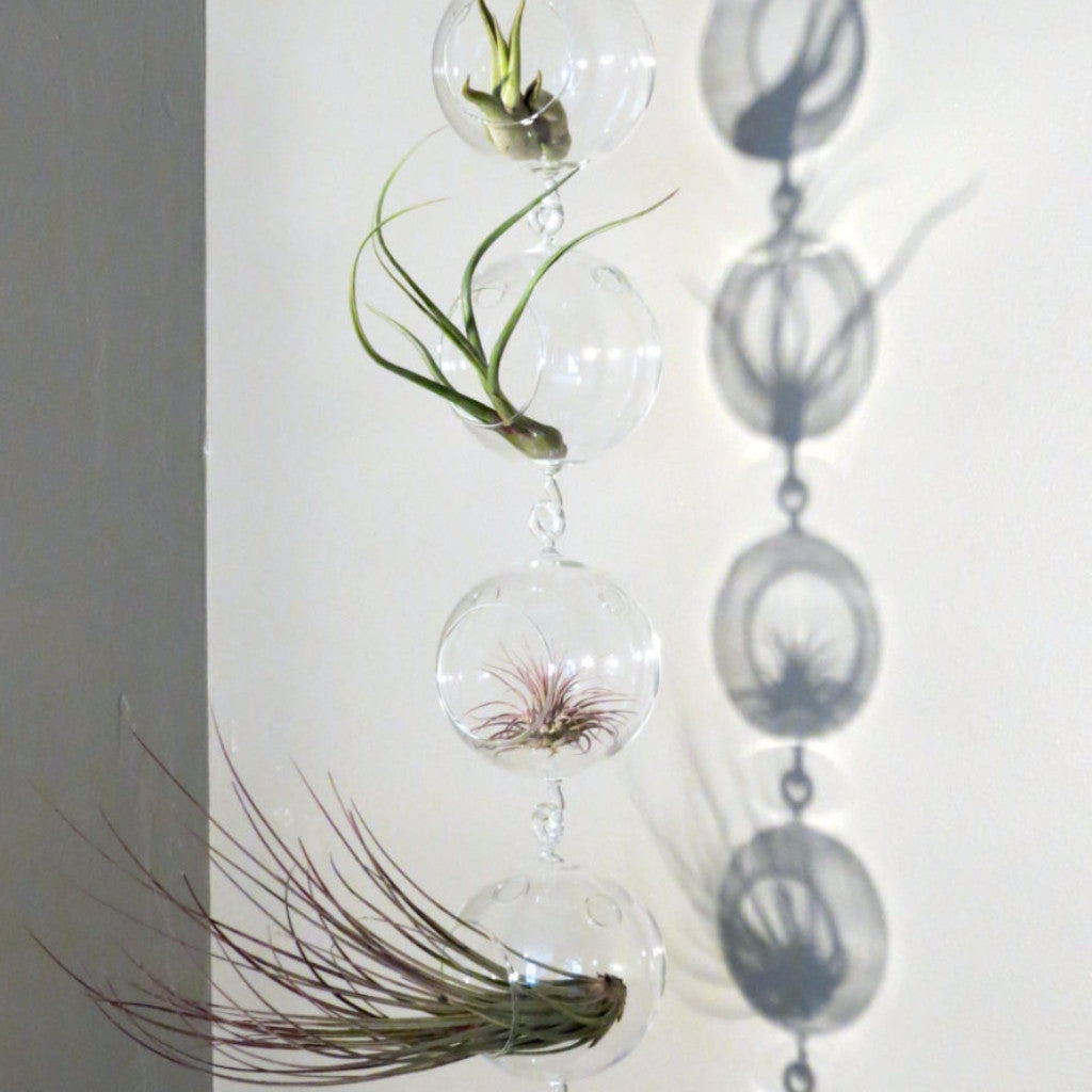 Vertical Garden Display featuring 6 Terrariums with Double Hooks and Air Plants