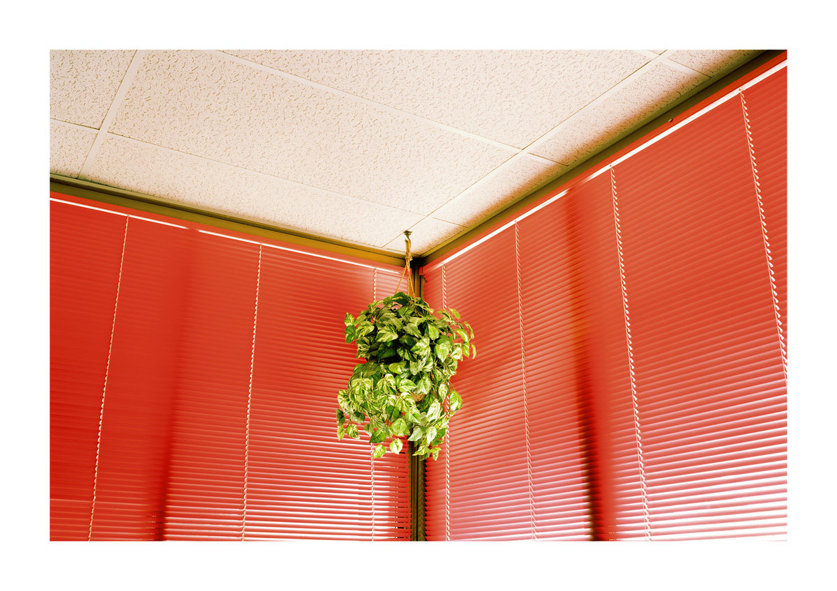 RED BLINDS - LOS ANGELES