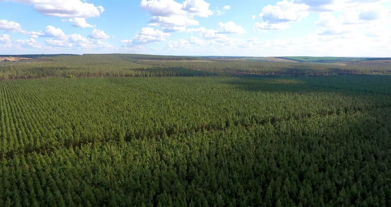 Sustainable Forest Project in Latin America