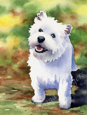 A West Highland Terrier portrait print based on a David J Rogers original watercolor
