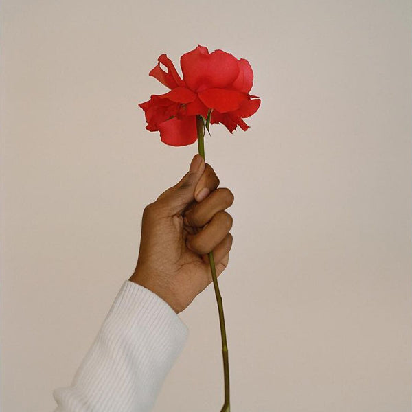 Black woman's hand and arm in a white long-sleeved shirt holding a fresh red flower