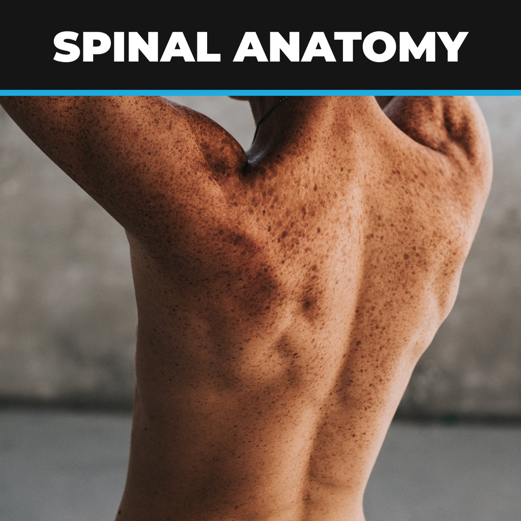 Spinal Anatomy, Ailments, Injuries and Exercises