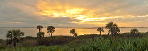 A panoramic photograph of a sunset with palm trees on the Mosquito Lagoon