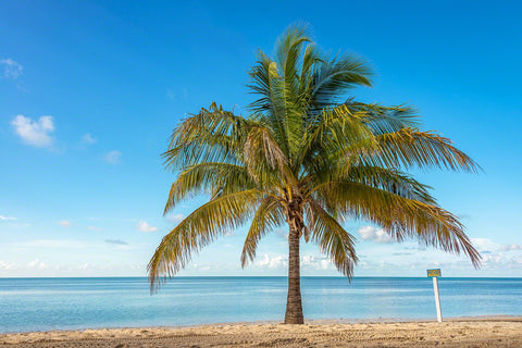 A Photo of a coconut Palm Tree on the beach in the Bahamas