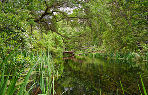 A photo of trees along the Ichetucknee river