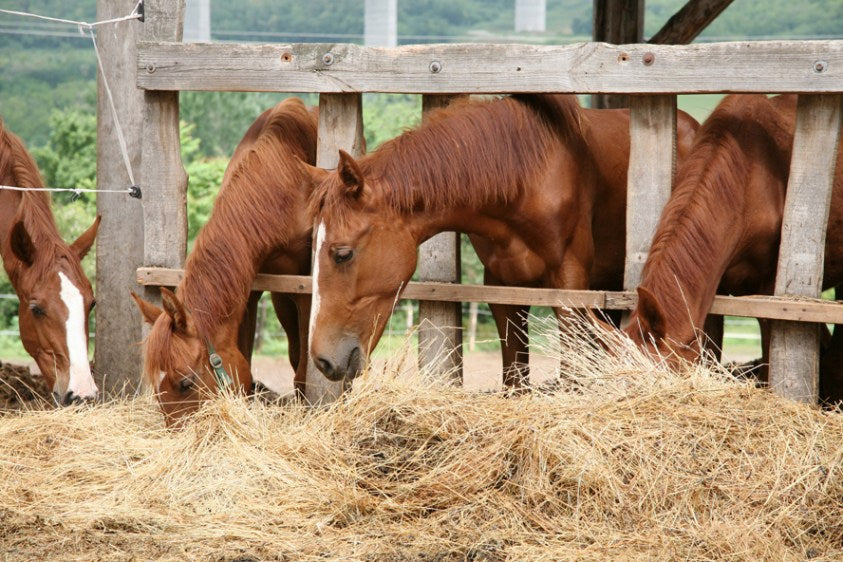 8 Handy Tips For Feeding Horses More Efficiently