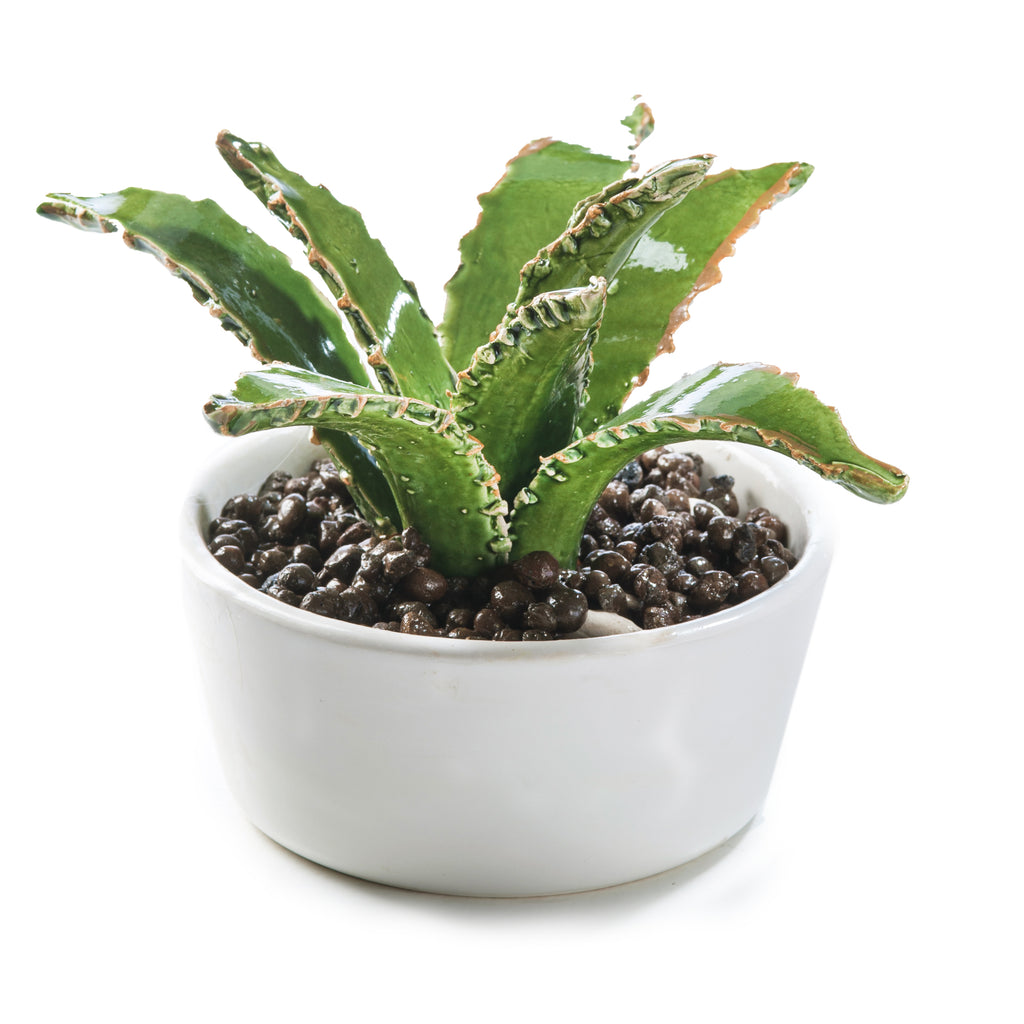 Broad Leaf Cactus Pot