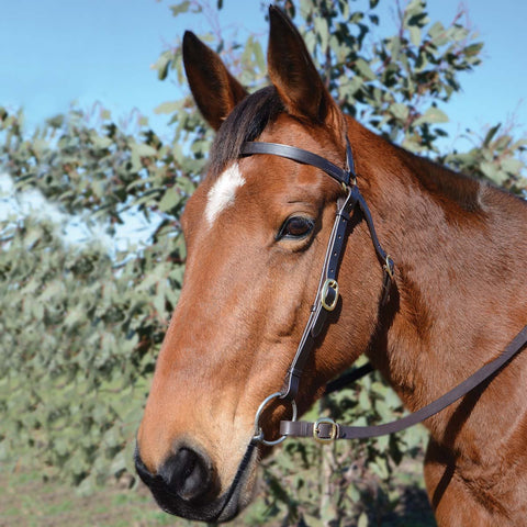 EUROHUNTER BARCOO BRIDLE