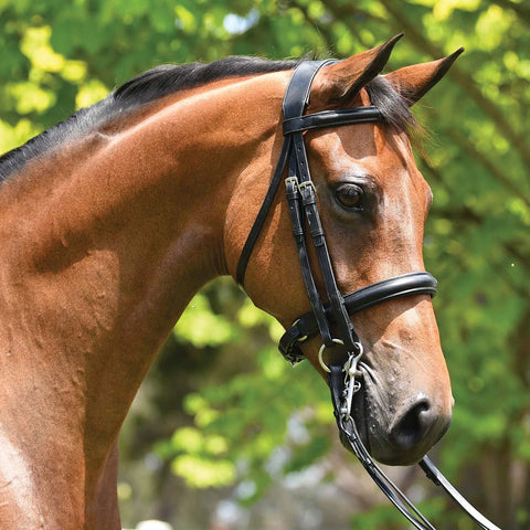 Grainge Elite Dressage Weymouth