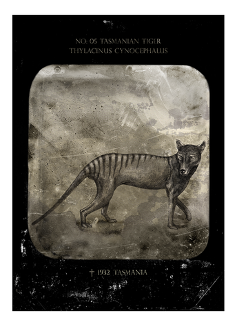 Tasmanian tiger – Fine art print, limited edition