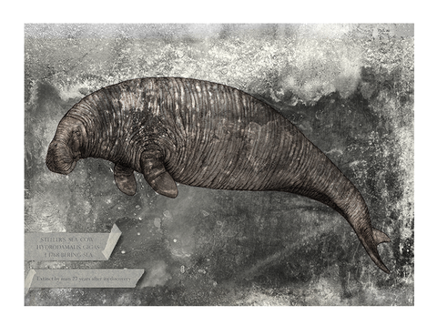 Steller's sea cow – Fine art print, limited edition
