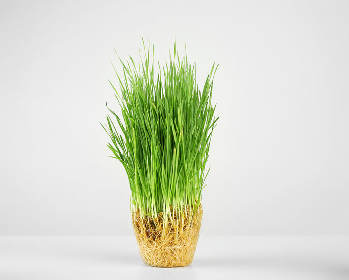 Why You Should Add More Grass (Yes… Grass) To Your Diet