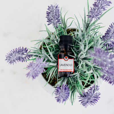 5 Reasons to Love Lavender