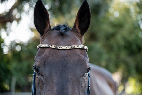 ST-BBD/010 Black Leather Browband