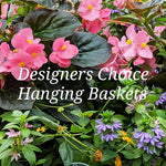 Designers Choice Hanging Baskets