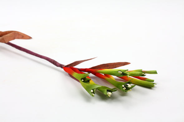 Kangaroo Paw Red/Green 63cm
