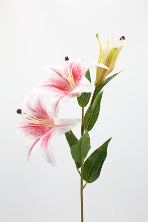 Casablanca Tiger Lily (2 heads) Soft Pink 80cm Real Touch