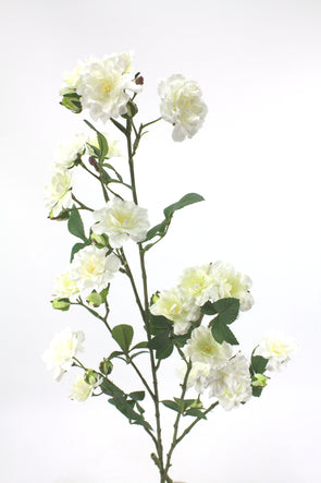 Rose Climbing Spray White