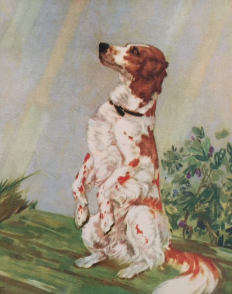 1930's American Dog Portrait, English Setter