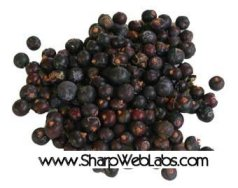 Juniper Berry Tea - Bulk Organic - 4 oz.