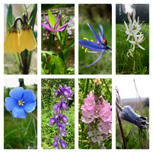 Load image into Gallery viewer, Card Set: Native Plants of the Inland Northwest (Vertical Edition)