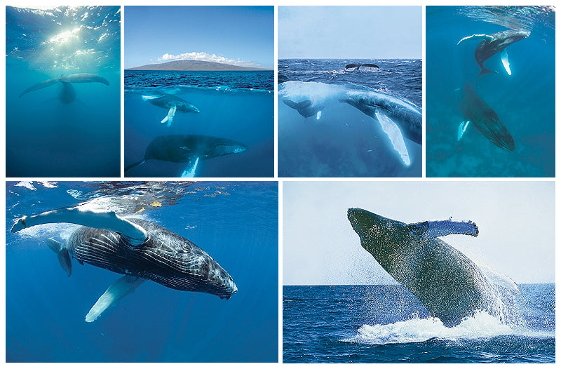 Wyland Nature Photography Note Cards - set of 6